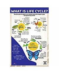 What is Life Cycle?