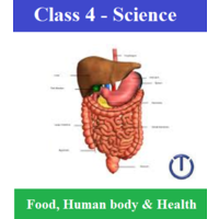 30 Worksheets, 05 online tests for Class 4 Science (Chapter: Human body, food and health)