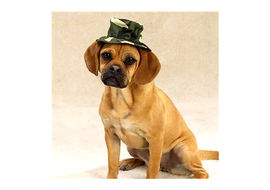 Zorba Designer Camouflaged Hat for Dogs, small