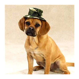 Zorba Designer Camouflaged Hat for Dogs, medium