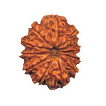 Twelve Mukhi Rudraksha Bead - Nepal, regular