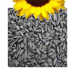 Sunflower Seeds, 1 kg