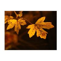 Canvas Wall Painting Maple Leaf