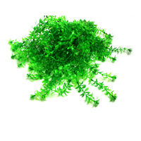 Champion Plastic Decoration Plant 12 Inches (Pack of 10)