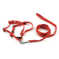 Easypets BESTMASTER Dog Leash with Collar (Small) (Red)