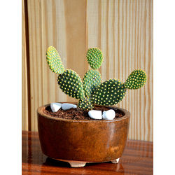 MUD FINGERS Bunny Ear Cactus in Ceramic Pot