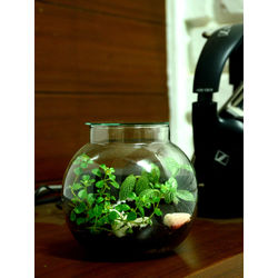 MUD FINGERS Round Terrarium (4 Inches)