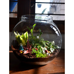 MUD FINGERS Round Terrarium (10 Inches)