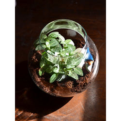 MUD FINGERS Round Terrarium (6 Inches)