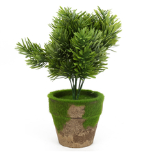 Light Potted Plant, Green