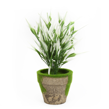 Potted Plant with White Tips, Green