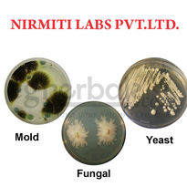 Total East/Mold/Fungal Count