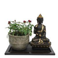 Rose Plant N Buddha