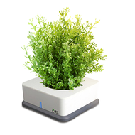 Smart Planter Automatic desktop Hydroponic Smart Planter,